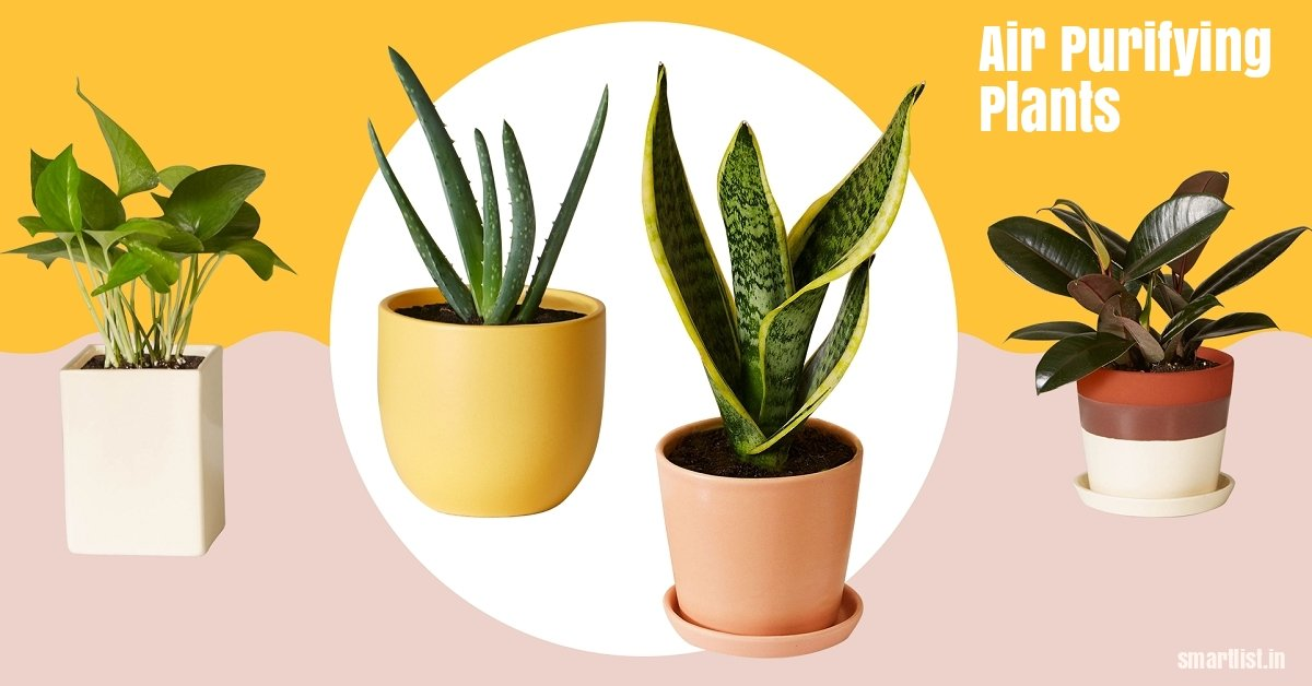 12 Air Purifying Plants You Must Have at Home (research by NASA)